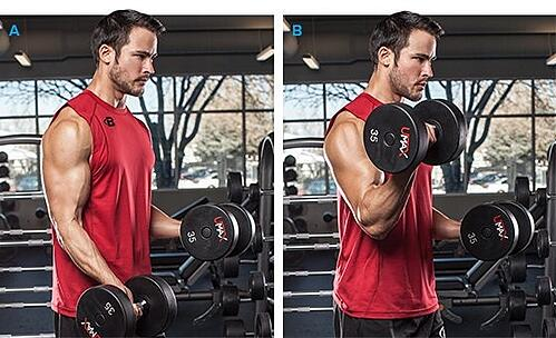Isometric Exercise Dumbbell Curl A